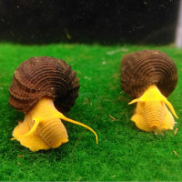 Poso Orange Rabbit Snail