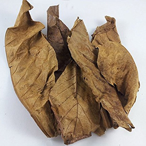 Indian Almond Leaves For Betta Breeding-25 Leaves